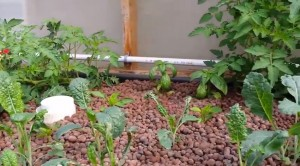 Nelson's Aquaponic System
